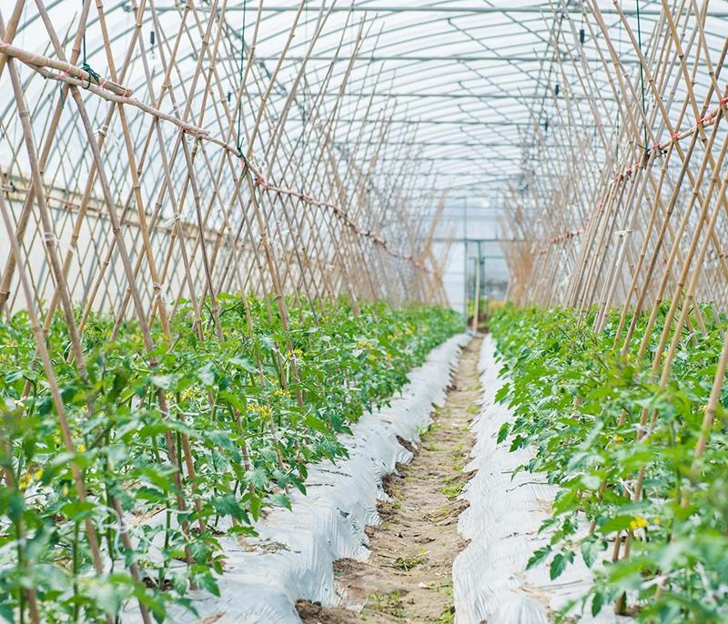 生态农业人才输送