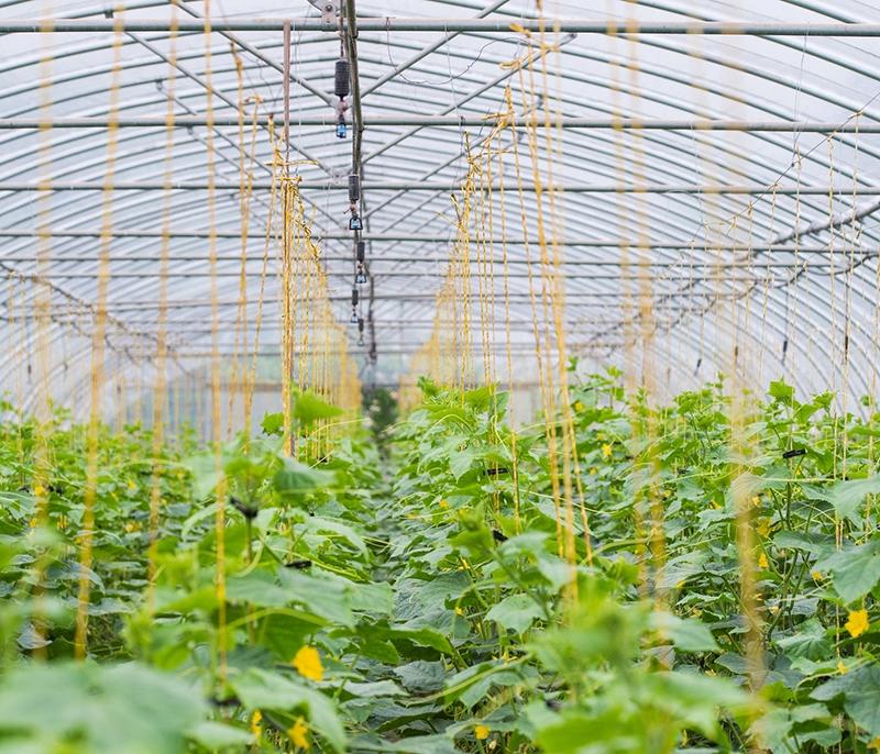 人才输送生态农业